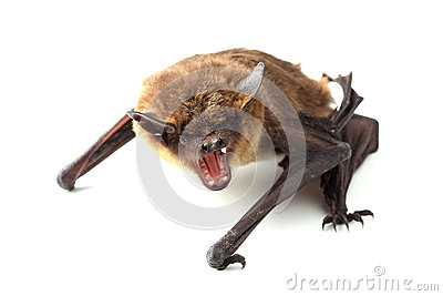 screaming bat on white