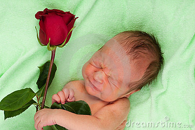 Screaming newborn with rose