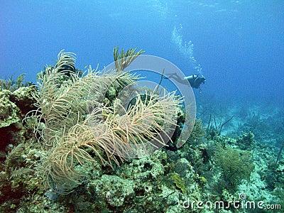 Scuba bahamas