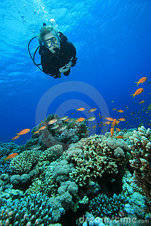 Free Scuba Diver And Coral Reef Stock Photos - 11352423