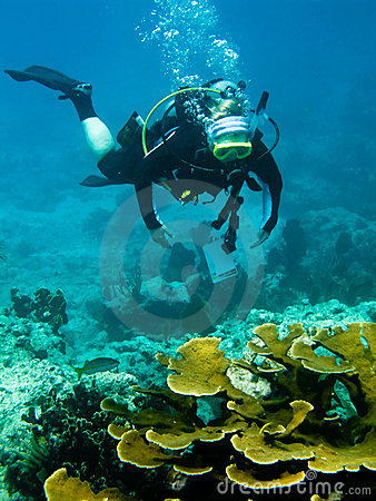 Free Scuba Diver And Coral Reef Stock Images - 6221104