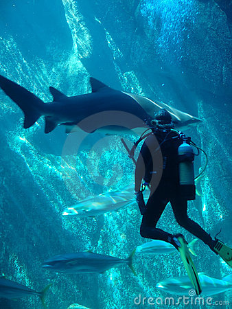 Free Scuba Diver And Shark Stock Photo - 525850