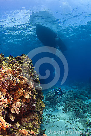 Scuba Diver next to a Coral Wall