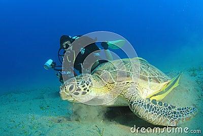 Scuba Diver and Sea Turtle