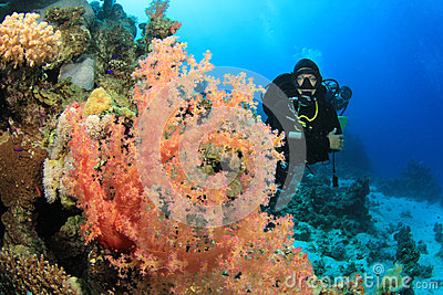 Scuba Diver and Soft Corals