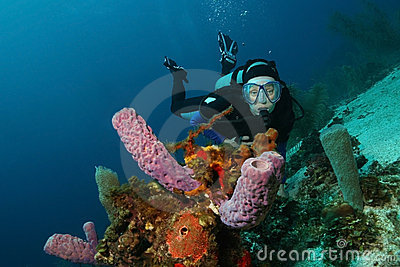 Scuba Diver and Sponges - Roatan