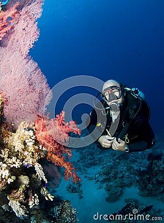 Scuba diver with vibrant coral