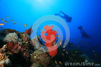 Scuba Divers explore reef