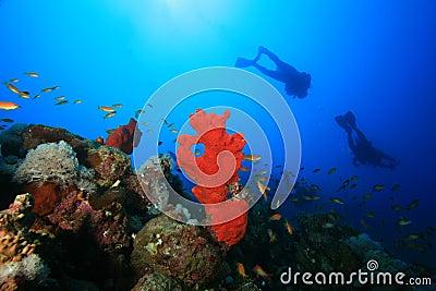 Scuba Divers explore reef