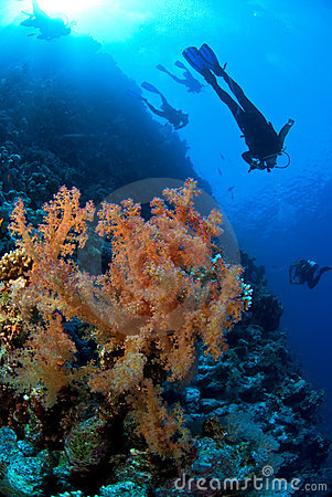 Free Scuba Divers Exploring Stock Images - 3501224