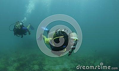 Scuba divers swim on a dive