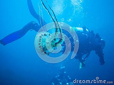 Scuba diving in Ireland