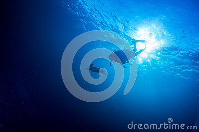 Scuba diving with Sea turtle