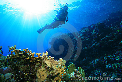 Scuba Diving In Tropical Seas Royalty Free Stock Images - Image: 10990369