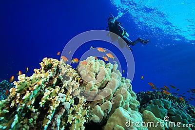 Scuba Diving in tropical seas