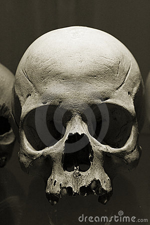Free Scull Stock Photo - 2388900
