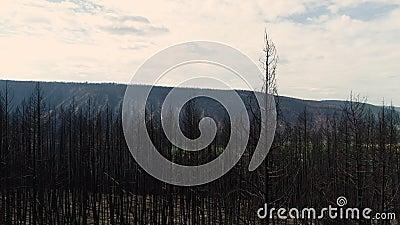 Se lève au-dessus des arbres brûlés banque de vidéos