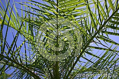 Se palmträdet