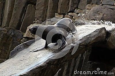 Sea lion, friendly animals at the Prague Zoo