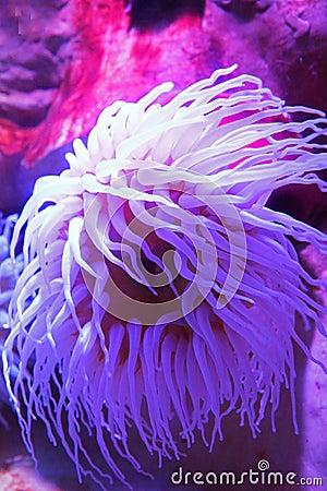 Free Sea Anemone Stock Photo - 56615630