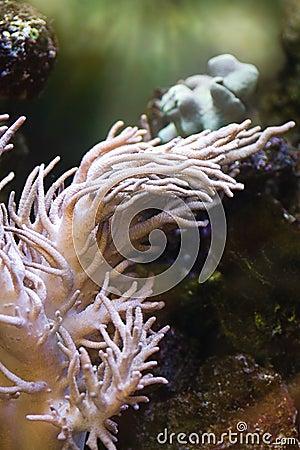 Sea anemone, predatory animal