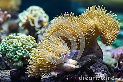 Sea anemones, predatory animals