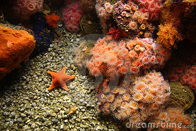 Sea anemones and starfish