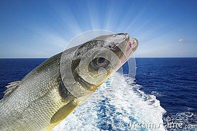Sea bass fishing