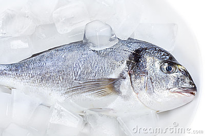 Sea bass on ice