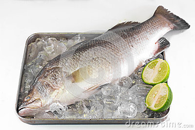 Sea bass on ice.
