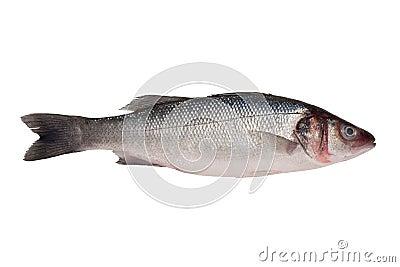 Sea bass - isolated