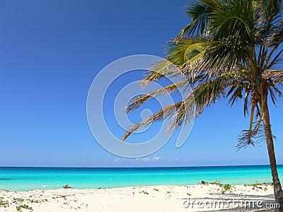 Sea and beach in Caribbean