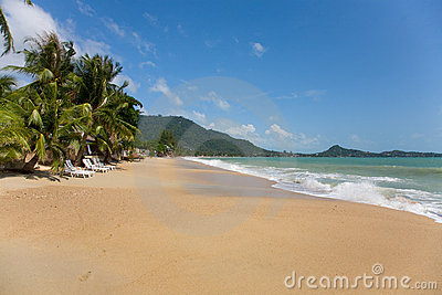 Sea and beach with coconut palm and sun lounger