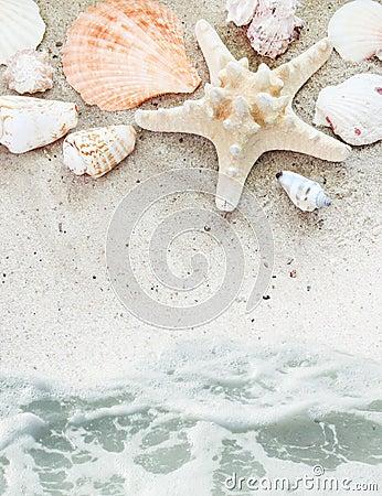 Free Sea Beach With Shells Border Stock Photo - 19973970