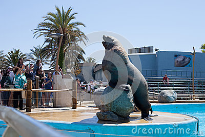 Sea Bear Editorial Image