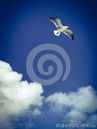 Free Sea Bird Flying In The Blue Sky With The Clouds Stock Photos - 136927883