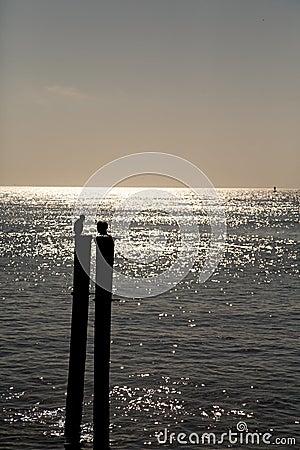 Sea birds on posts silhouette