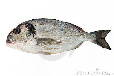 Sea bream Stock Photo