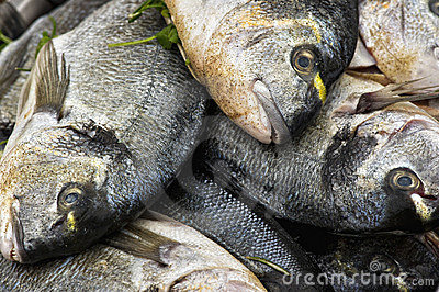 Sea bream in a pile