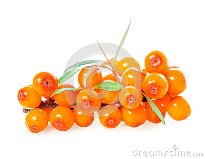 sea buckthorn berries branch is isolated on white Stock Photo