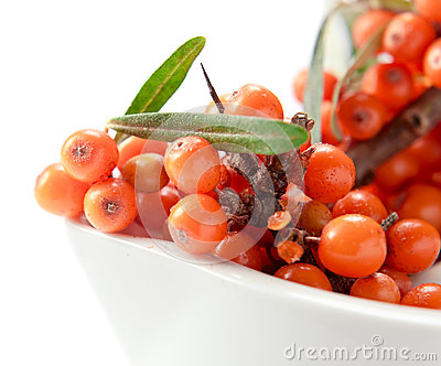 Sea-buckthorn berries  isolated on white