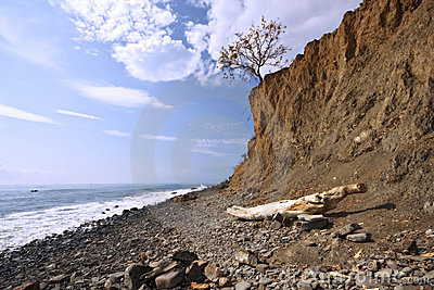 Sea coast with boulders, stones and dry tree