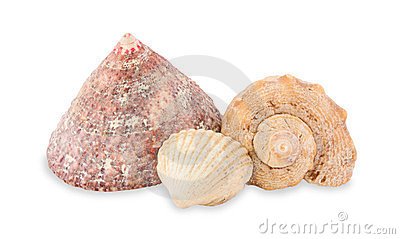 Sea cockleshells.