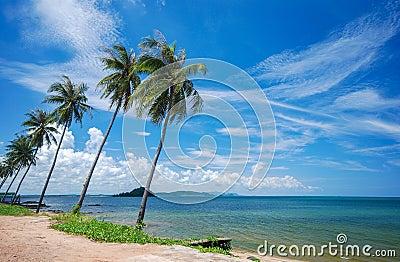 Sea and coconut palm