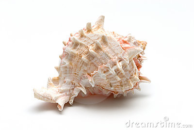 Sea conch isolated on white