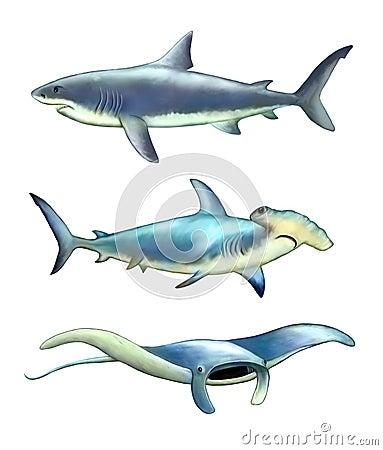 Sea creatures Cartoon Illustration