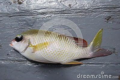 Sea fish laid on the floor