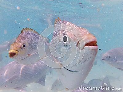 Marine fishes of malaysia