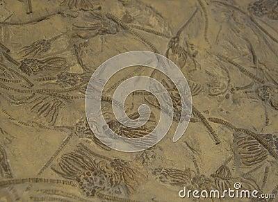 Sea Fossils