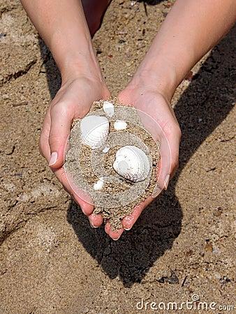 Sea gift - shells Stock Photo